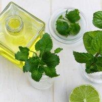 Ätherisches Öl Pfefferminze: Pflanze, Herstellung, Inhaltsstoffe