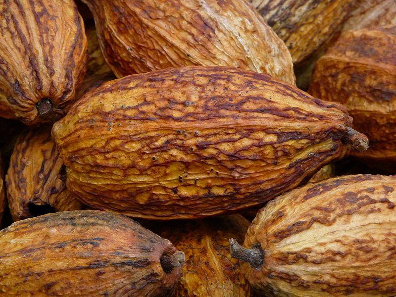 Früchte des Kakaobaumes