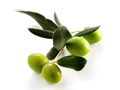 Olivenstrauch mit Oliven für Olivenöl