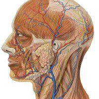 Shiroabhyanga: Ayurvedische Kopfmassage mit Öl