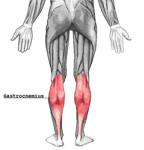 Waden - Musculus Gastrocnemius